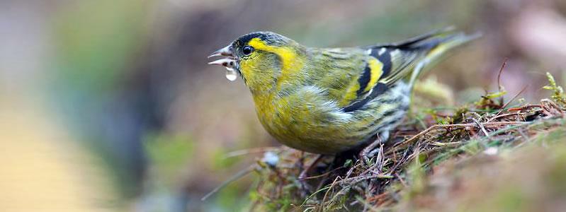 vogel_vriendelijke_tuin2