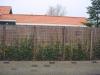 Erfafscheiding; gegalvaniseerd betongaas met wilgentenen en Hedera hibernica