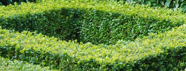 Tuinplant van de maand Maart: Buxus