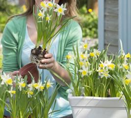 Lentebloeier van het Jaar 2014: Narcis 'Topolino'