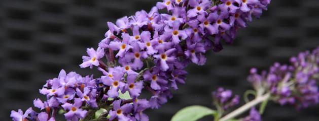 Planten in april