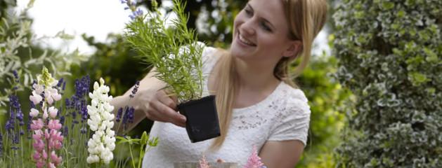 Tuinplant van de Maand Mei: Zomerbloeiers