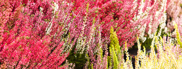 Planten in oktober