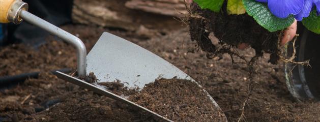 Plant u in een goede bodem?