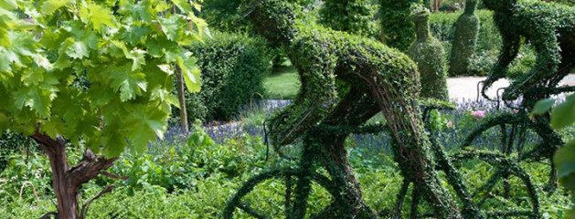 Tuinplant van de Maand april: Buxus