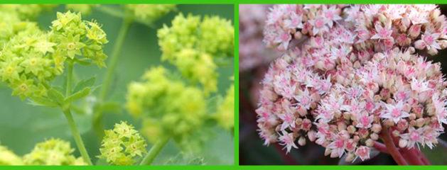 Winterharde planten, wat zijn dat?